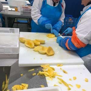 persoonlijke beschermingsmiddelen en disposables voor de foodindustrie
